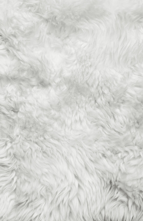White fur background  Close up
