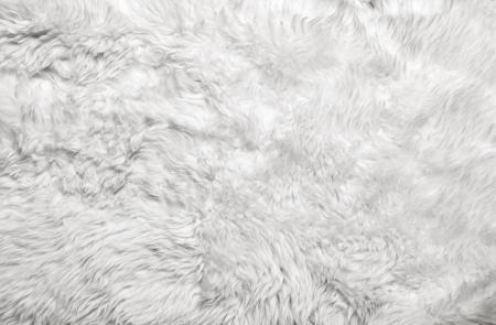 White fur background  Close up