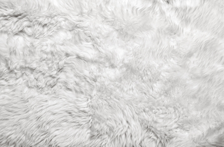 White fur background  Close up photo