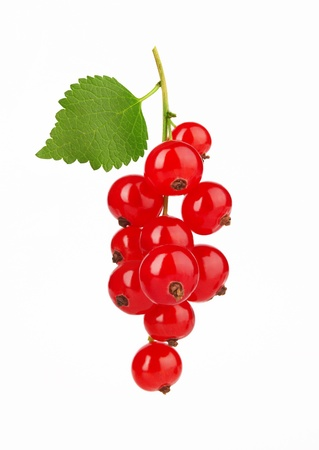 red currant: Red Currant with leaf, isolated on white background