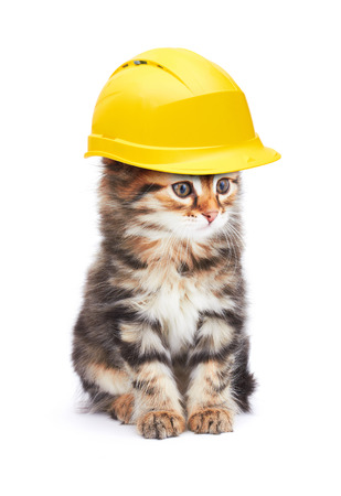 kitties: Cat with helmet, isolated on white background Stock Photo