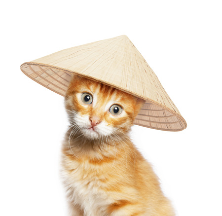 conical hat: Red cat in asian conical hat, isolated on white background