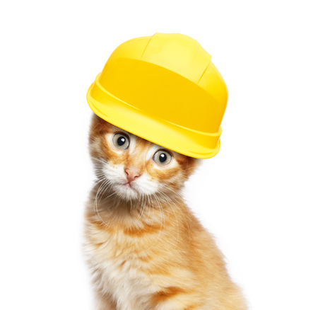 Red cat with helmet, isolated on white background Stock Photo