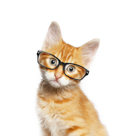 Red cat in glasses, isolated on white backgroundv Stok Fotoğraf