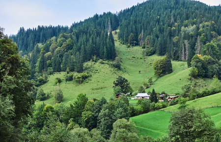 Mountains with forests. Carpathian Mountains, Ukraine, Europe Stock fotó