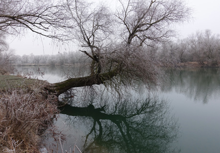 Winter scene with river at the park