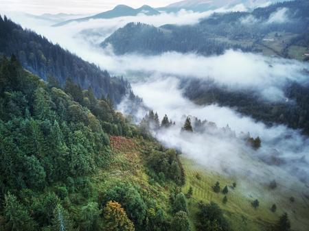 Mountains with forests. Carpathian Mountains, Ukraine, Europe Stok Fotoğraf