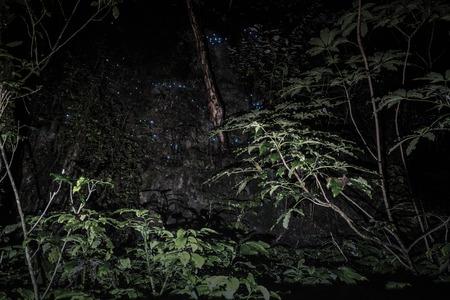 glowworm: Glowworm in forrest , New Zealand Stock Photo