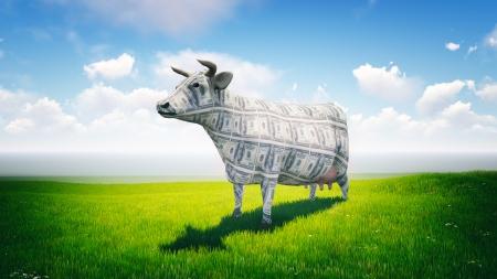 vaca: Vaca de efectivo de pie en el campo verde en un d�a soleado