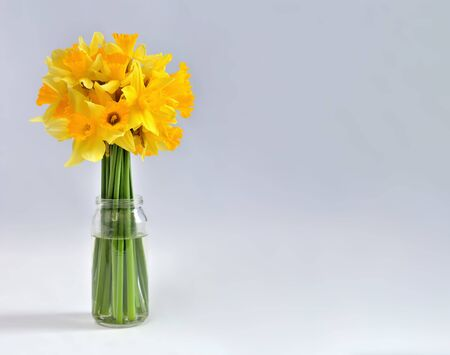 Bouquet of daffodils flowers in glass jar on white background with copy space on the right-hand side of the image