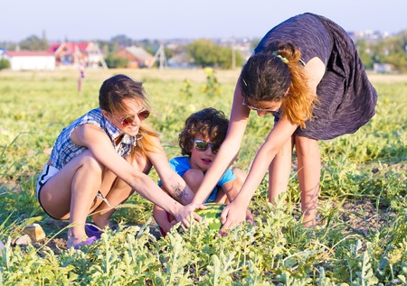 Portrait of a farmer's children with whole watermelon at field of farm. Children try to raise, divide the last watermelon on the melon field. Family leisure concept Stock Photo