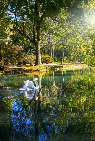 White swan on the pond, New Athos, Abkhazia Stock Photo