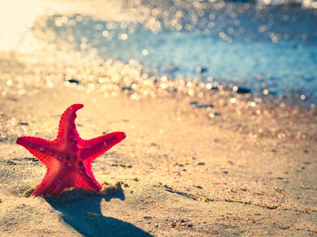 Tropical beach with toy starfish in the sand, copy space for text. Summer vacation concept. Copy space Standard-Bild