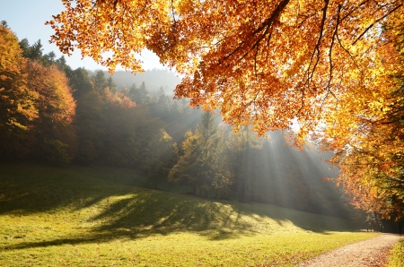 Autumn forest with sun beam photo