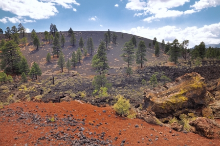 Pine trees at Sunset Crater volcano in Flagstaff