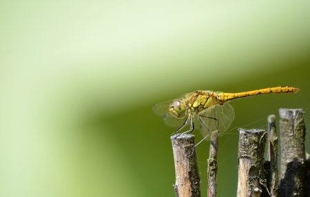 Dragonfly in camuflage on brown wood green background
