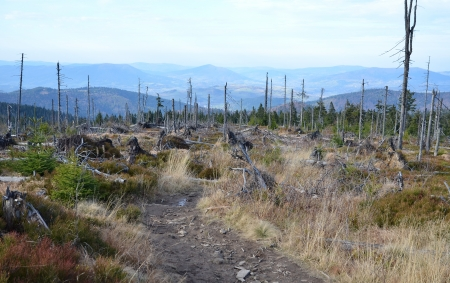 Trunks of trees burned in a forest fire photo