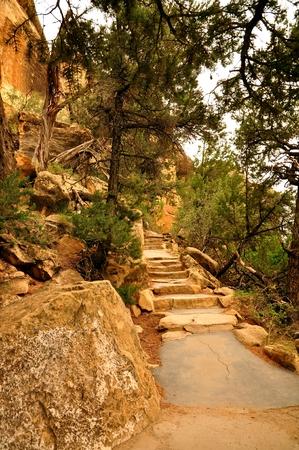 mesa: Mesa Verde stairs