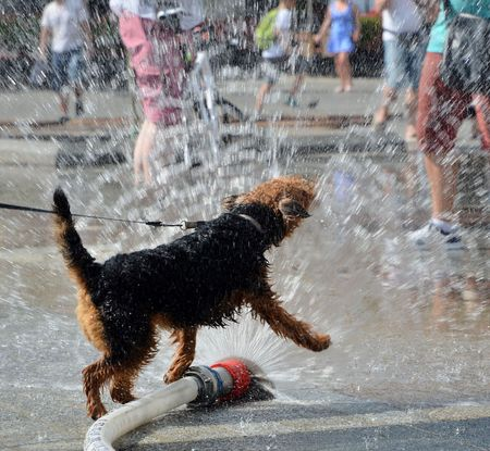 dog jumping in water from firehose photo