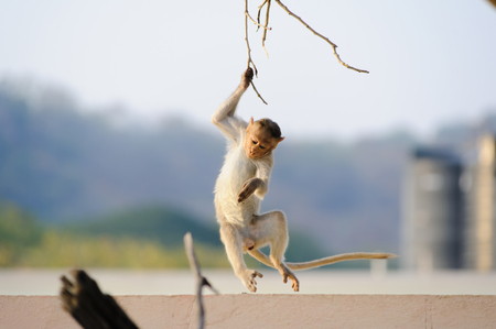 A dexterous moving monkey holds on to a branch