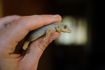 Lizard keeping in the human hand from the first person view pov Stock Photo