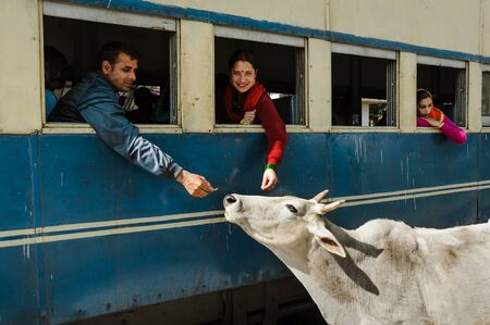 two Indians feed the cow through train window. 27 february 2018 India. Editorial
