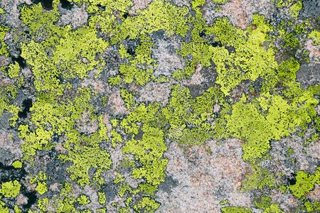 green lichen textrure on grey stone background