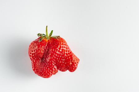 Ugly strawberry isolated at white background. Strange strawberry looks like elephant head. Copy space