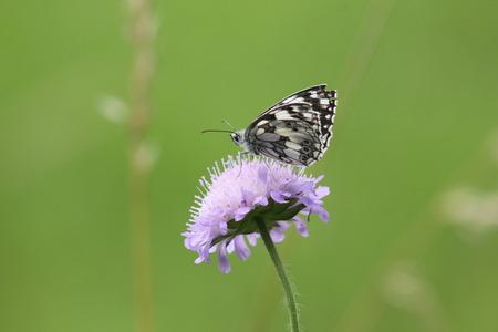 animalitos tiernos: Papel de la cometa de la mariposa en la flor