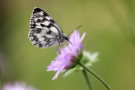 Butterfly on flower  butterflyare beautiful moths that make nature colorful and give us joy.
