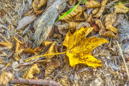 Yellow maple leaves on the background of a old wood / Background for artwork and design Stockfoto - 114356378