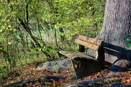 Old wooden bridge in the forest / It is so important to relax and think for a moment Stockfoto