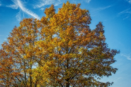 Autumn tree with golden leaves in creative HDR design Stockfoto
