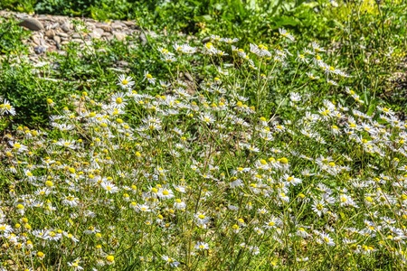 Landscape shot - summer meadow with beautiful plants