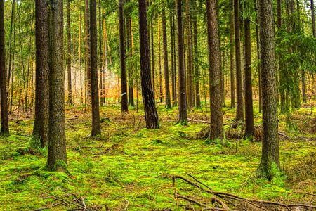 The magical world of the forest in colorful colors Stockfoto