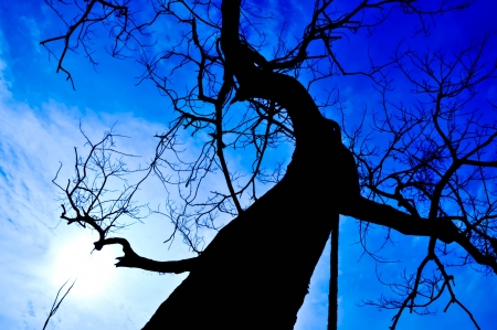 siluet: Siluet tree and blue sky in sunny day