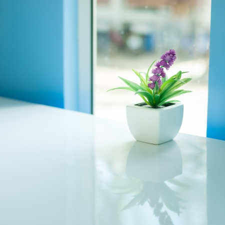 Flowers near a window in bright day photo
