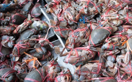 Fresh crabs sold in the market mornings. photo
