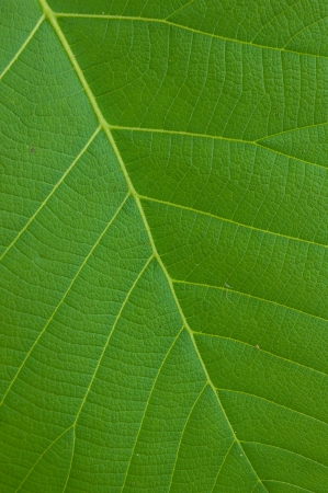 close range: Details of the leaf was photographed at close range