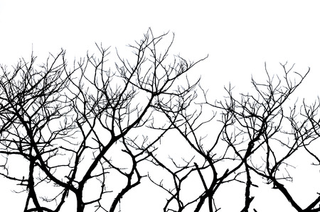 Silhouettes of a tree on a white background photo