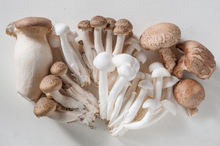 Stack different mushrooms on a white background Stockfoto