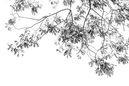 Abstract pattern from silhouettes of leaves and tree