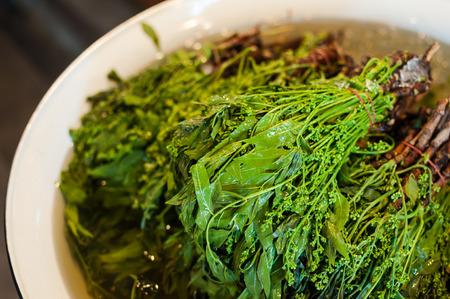 quinine: Siamese neem tree, Nim, Margosa, Quinine (Azadirachta indica A. Juss. Var. Siamensis Valeton), Stock Photo
