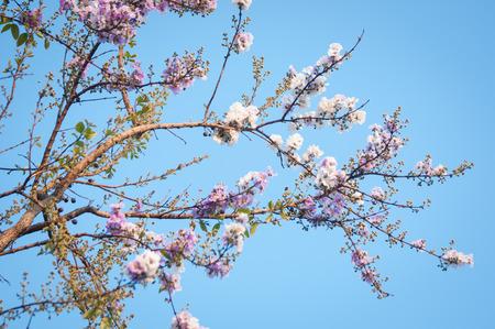 annonaceae: Cananga flower on a sky background Stock Photo