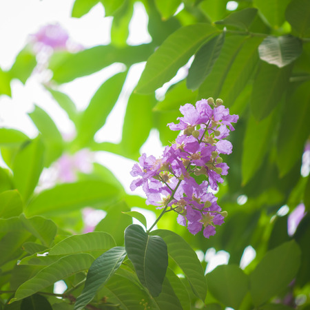 annonaceae: Cananga flower on a natural background Stock Photo