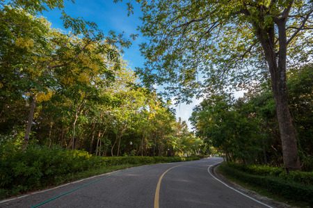 Empty curved road with blue sky and trees photo