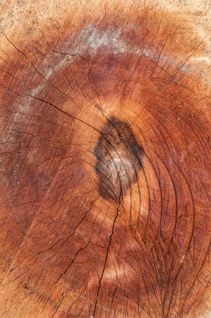 Close-up of tree stump background photo
