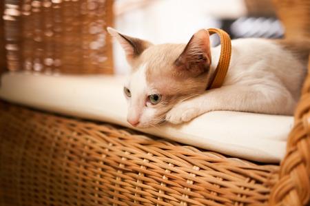 Kitten on a wicker chair Stock Photo