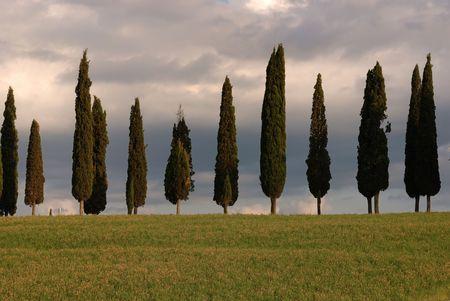 vertical photo