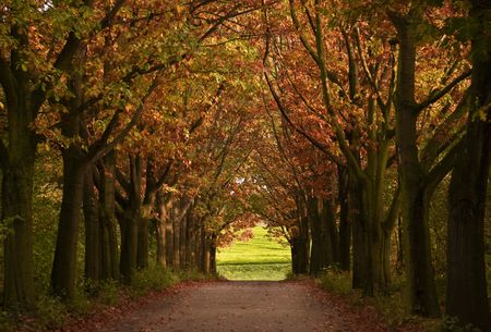 wooded: autumn path Stock Photo